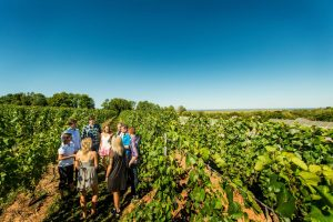 Vineyard tour at Domaine de Grand Pre